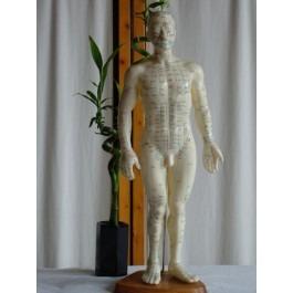 50cm Body Model